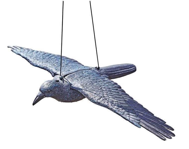 Oase Teichfigur Rabe fliegend